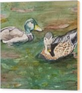 Mallard Ducks With Spawning Salmon Wood Print