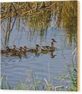 Mallard Hen And Ducklings Wood Print
