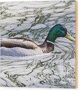Mallard In Froth Wood Print