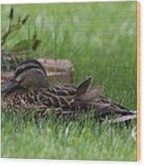 Mallard Nesting Wood Print