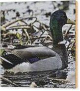 Mallard On San Jacinto River Wood Print