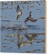 Mallard Pair Takes Flight Wood Print