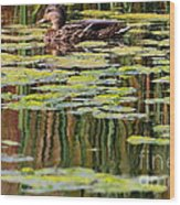 Mallard Pond Wood Print