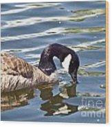 Mallard Reflection Wood Print