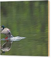 Mallard Splash Down Wood Print