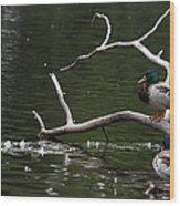 Mallard Standing Post Wood Print