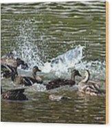 Mallard Water Party 2 Wood Print