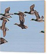 Mallards Flight Wood Print