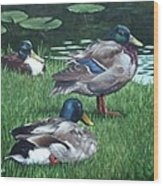 Mallards On River Bank Wood Print by Martin Davey