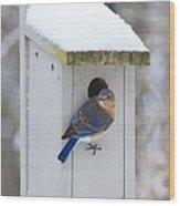 Mama Blue Bird In Winter Wood Print