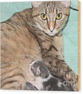 Mama Cat And Her Kittens Wood Print