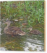 Mama Duck And Baby Wood Print