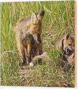 Mama Fox And Kits 2 Wood Print