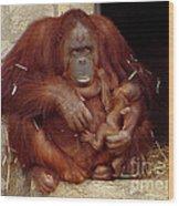 Mama N Baby Orangutan - 54 Wood Print