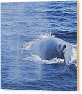 Mama Whale Wood Print