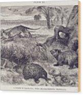 Mammals Of Tasmania Wood Print