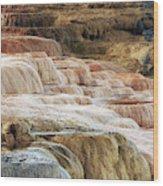 Mammoth Hot Springs Terracaes Wood Print