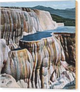 Mammoth Hot Springs Yellowstone Np Wood Print