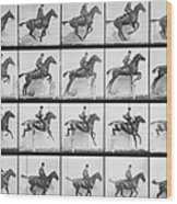 Man And Horse Jumping A Fence Wood Print by Eadweard Muybridge
