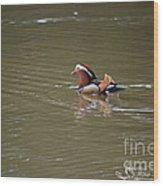 Mandarin Duck 20130507_45 Wood Print