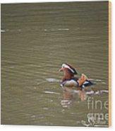 Mandarin Duck 20130507_47 Wood Print