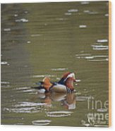 Mandarin Duck 20130507_99  Wood Print