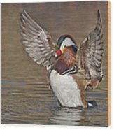 Mandarin Duck Flapping Away Wood Print