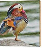 Mandarin Duck Posing Wood Print