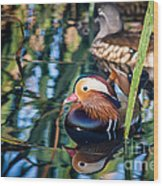 Mandarin Duck Reflections Wood Print