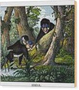 Mandrill Wood Print