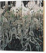 Mangrove Aerial Roots Wood Print
