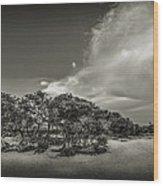 Mangrove At Low Tide Wood Print