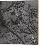 Mangrove Floor Wood Print
