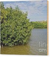 Mangrove Fores Wood Print by Carol Ailles