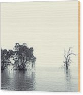 Mangrove Forest By The Sea Wood Print by Ernst Cerjak