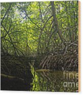 mangrove forest in Costa Rica 1 Wood Print