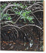 Mangrove Forest In Los Haitises National Park Dominican Republic Wood Print