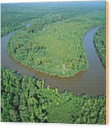 Mangrove Forest In Mahakam Delta Wood Print by Cyril Ruoso