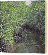 Mangrove Forest Wood Print by Tony Murtagh