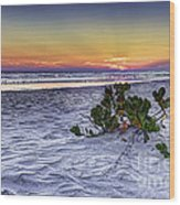 Mangrove On The Beach Wood Print