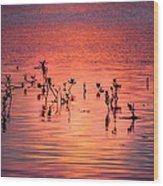 Mangrove Paradise Wood Print