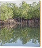 Mangrove Refelections Wood Print