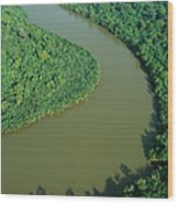Mangrove Rhizophora Sp In Mahakam Delta Wood Print