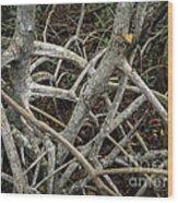 Mangrove Roots 1 Wood Print