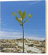 Mangrove Seedling On A Beach Wood Print