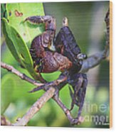 Mangrove Tree Crab Wood Print