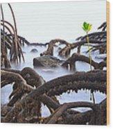 Mangrove Tree Roots Detail Wood Print