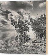 Mangroves Wood Print