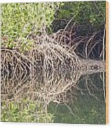 Mangroves In The Gambia Wood Print