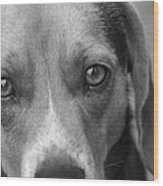 Man's Best Friend In Black And White Wood Print